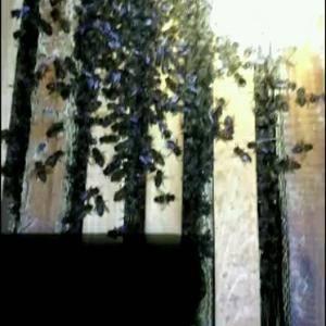 原生态土蜂蜜,蜂场在大山深处,环境优越,品质有保证,玻璃...