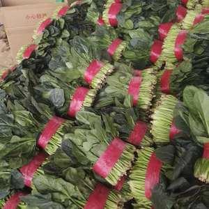 菠菜大量上市,质量服务一条龙。