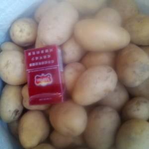 常年批发销售黄皮黄心红皮黄心和白心小土豆,二次精选,无腐...