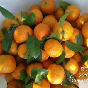 大批量沙塘橘,皇帝柑上市!!!沃柑也即将上市!!!!有需...