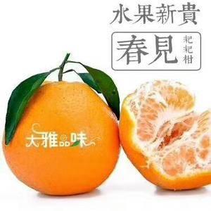 自家果场出售春见70――90果子纯甜套袋果,收购橘子老板...