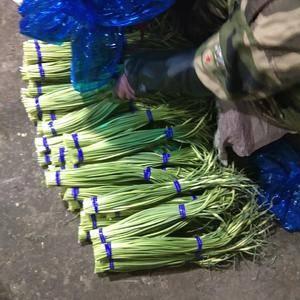 冷库蒜苔。货源充足,价格便宜。18315751818