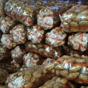 荷兰十五,货源充足,薯型好,个头大,颜色干净