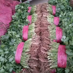 河南豫农农产品有限公司,常年大量供应各种瓜果蔬菜,香菜,