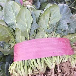 河南豫农农产品有限公司,常年大量供应各种瓜果蔬菜,菠菜