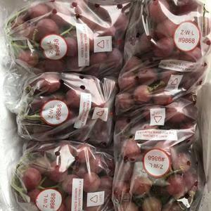 大量供应红提葡萄