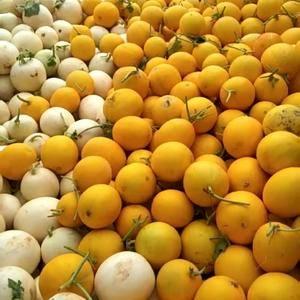 本地大量生产各种瓜果蔬菜。甜瓜,梨瓜,西瓜,哈密瓜,甜王...