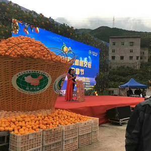 秭归脐橙,碰柑大量上市了,果园看货,现看现采,欢迎各地客...