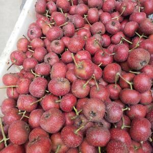 需要大金星山楂,切片果,打浆果的老板联系我