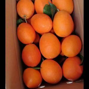 长虹,纽荷尔,圆虹,血橙各种脐橙产地直销大量供应