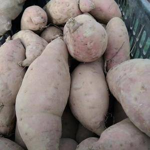 大量批发本地自产红薯