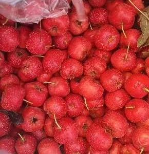 这里是山东省泰安市新泰市甜红山楂,适合炒糖球,糖葫芦;无...