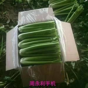 山东省温室大棚西芹大量上市,净菜1斤-1.5斤0.85元...