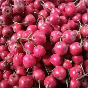 优质大歪把红山楂,质量好价格美丽,做冰糖葫芦和糖炒山楂最...