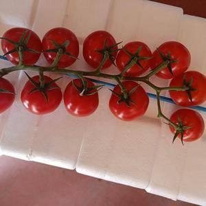 千禧,贝贝,红串,黄串,花莲,守红等圣女果大量上市