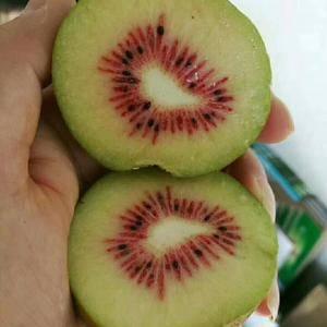 红心猕猴桃苗是来自四川苍溪猕猴桃之乡所产