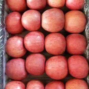 陕西省大荔县大量供应膜袋红富士苹果,红香酥梨,库存酥梨,...