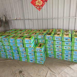 玉菇甜瓜,大量上市,品相好,口感甜,我们负责包装上车,需...