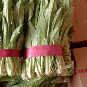 长年代收油麦菜等各种蔬菜。。