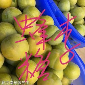 贵州原产地蜂糖李苗,甜得像初恋,好吃的无与伦比