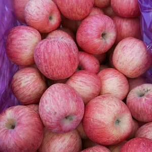 13371261682 山东红富士苹果大量上市,口感脆甜...