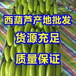 山东绿葫芦大量上市产地直销,货源充足价格便宜质量很好,速...