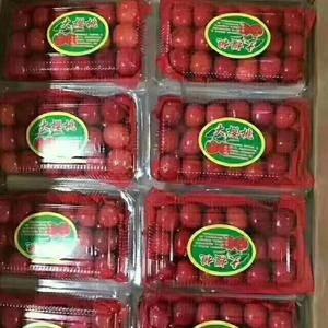 大棚樱桃开始供应,品种有红灯,美早,黄蜜等,需要可以随时...