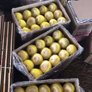 乐亭甜瓜大量上市啦,品种有:绿宝,金典,花姑娘,花蕾,八...