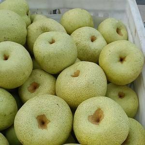 精品起市专供砀山梨,半斤以上,果面光滑!