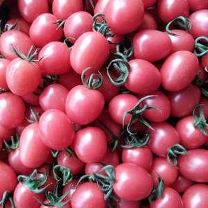 山东圣女果,暖棚第一批果实,酸甜可口,色泽透亮,欢迎广大...
