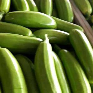 西葫芦大量上市,直接对结超市和各个批发商,大量供应,货源...