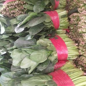 山东省泰安市良庄市场大叶菠菜上市了