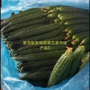 黄瓜,上市中
