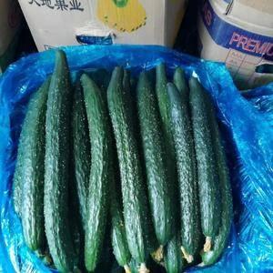 密刺黄瓜。质量好。价格低。专供市场超市。