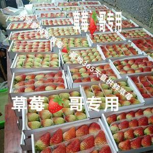 会泽蒙特瑞草莓