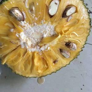 海南菠萝蜜马亚1号,果农直接从果园里现摘直销