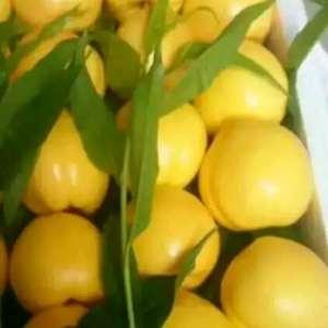 山东油桃大量上市,品种齐全,质量第一,价格合理,口感纯正...