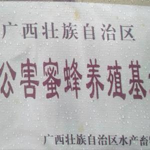 纯天然无公害九龙滕蜜,百花蜜,荔枝蜜,龙眼蜜,蜂花粉,蜂...