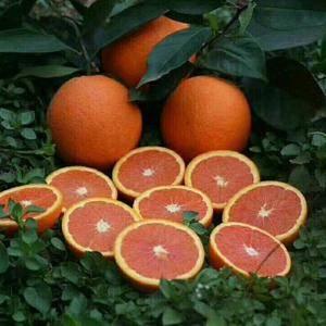 秭归伦晚,夏橙已经大量上市,口感甜,水份足,价格低廉,量...