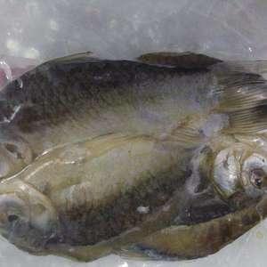 常年经营鸭绿江野生鱼,虾本人在江边有冷库可以带加工一手货...