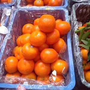各大地区的客商你们好,我是贵阳水果蔬菜批发市场上的档口老...
