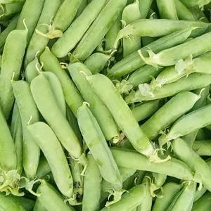 长寿仁碗豆要的老铁联系我13769799637每天两到五...