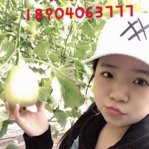 凌海市张东果蔬种植专业合作社专业从事西瓜代收、香瓜代收、...