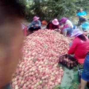 我们这油桃,毛桃已大量出货,欢迎新老客户光临