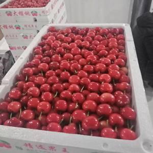 红灯大樱桃,美早大樱桃,中档高档都有1786122211...