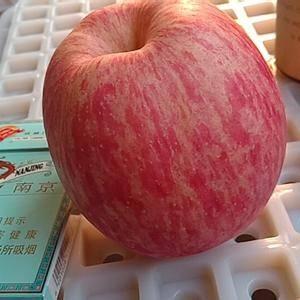 (15263920090) 山东红富士苹果产地批发价格行...