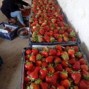 甜草莓,大量上市了