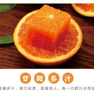 柑橘生产在长寿之乡彭山区,黄丰镇种橘子有近10多年,有很...