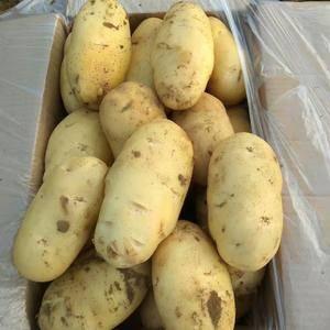 山东肥城荷兰十五土豆大量上市供应中,春季大棚鲜土豆。 ...