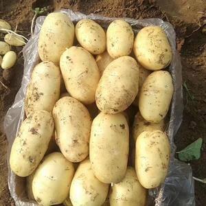 滕州市万亩土豆已经上市了,今年土豆个头大体形好颜色亮,有...